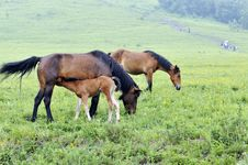 Free Mare And Its Children Royalty Free Stock Images - 13994149