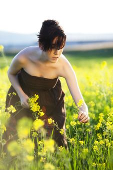 Free Collecting Yellow Flowers Stock Photo - 13995430