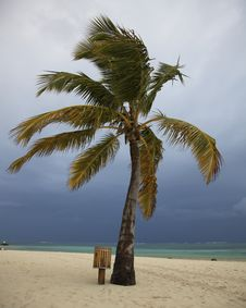 Palm Tree With Storm Clouds Stock Photo