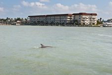 Free Dolphins In The Water Royalty Free Stock Photo - 13998505