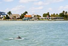 Free Dolphins In The Water Stock Photography - 13998512