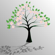 Free Tree-Ecology Stock Photo - 13999420