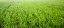Free Grass Stock Photography - 13999862
