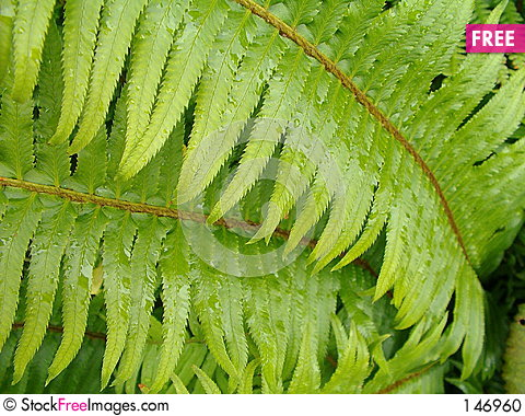 Fern Pictures Free Free Green Fern Leaf With