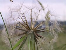 Free Dry Dandelion Stock Photography - 141842