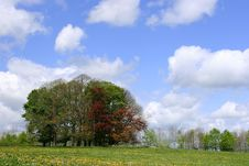 Free Blue Sky Day Royalty Free Stock Photo - 142005