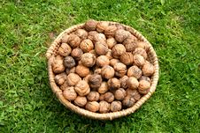 Free Basket With Walnuts Royalty Free Stock Images - 142199