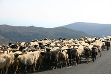Free Crete / Sheep Blockade Royalty Free Stock Photo - 142455