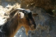 Free Crete / Goat Royalty Free Stock Photo - 142465