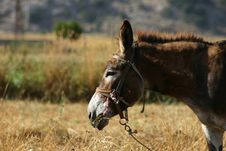 Free Crete / Donkey Stock Photos - 142493
