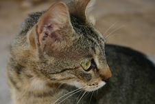 Crete / Cat Begging For Food Royalty Free Stock Image