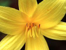 Free Pollen Stock Image - 142531
