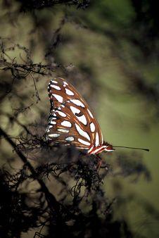 Free Brown Moth Stock Photo - 143600
