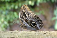 Free Butterfly Royalty Free Stock Image - 144316