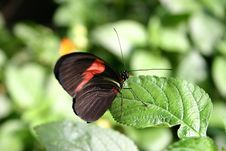 Free Butterfly Stock Photo - 144320