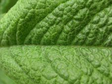 Free Leaf Details Royalty Free Stock Photo - 145585