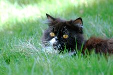 Free Cat In The Grass Royalty Free Stock Photography - 146427