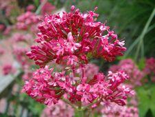 Free Flower Macro Royalty Free Stock Image - 147406