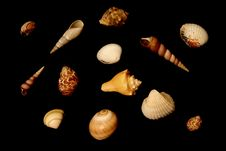 Free Isolated Seashells Stock Photography - 148022