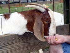 Free Hand Feeding Stock Image - 148621