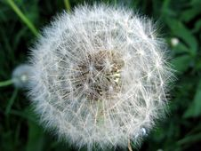 Free Dandelion S Fuzz Stock Photography - 148982