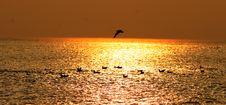 Free Seagulls Royalty Free Stock Photo - 149205