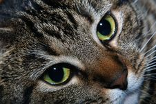 Free Face Of A Cat Stock Photo - 149210