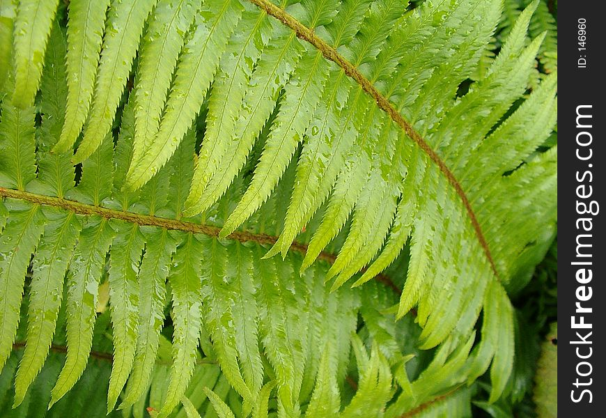 Green fern leaf with water droplets