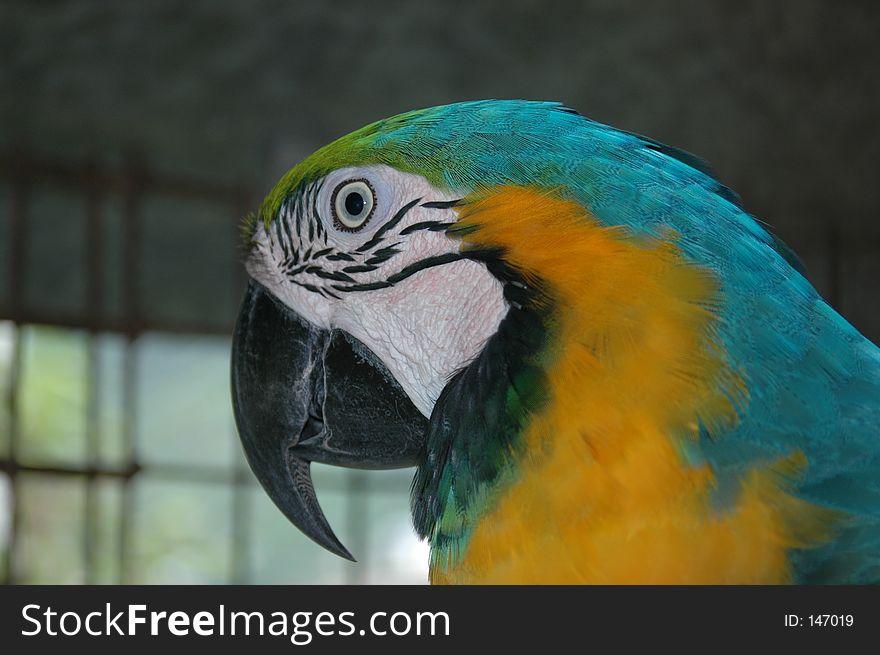 LeeRoy the Macaw