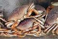 Free Crabs Stock Photos - 1408803