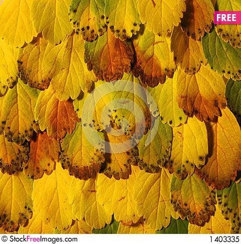 Yellow leaves pattern Stock Photo