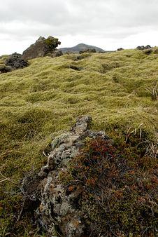Moss On Lava Field Stock Photos