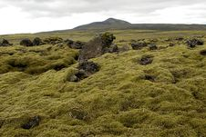 Free Moss On Lava Field Stock Photos - 1400843