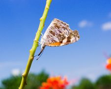 Free Solitary Butterfly Royalty Free Stock Image - 1401346