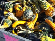 Free Colorful Gourds Royalty Free Stock Photos - 1401658