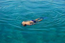 Free Snorkeling Royalty Free Stock Photos - 1403038