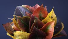 Collection Of Autumnal Leaf Royalty Free Stock Photography