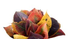 Collection Of Autumnal Leaf Royalty Free Stock Images