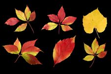 Free Autumn Leaves Stock Image - 1404821
