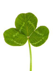 Free Green Clover Stock Photography - 14000202