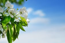 Free Blossom Stock Images - 14000604