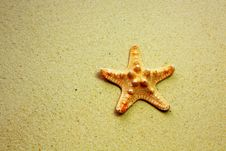 Free Starfish On Sandy Beach Stock Photos - 14000613
