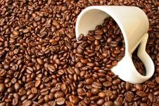 Free Coffee Beans Stock Image - 14000931