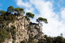 Free Italy, Trees On A Mountain Crest Stock Photography - 14002292