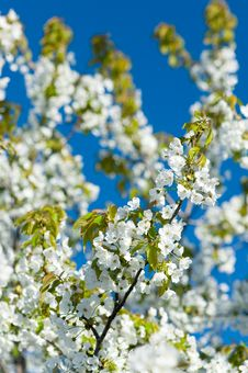 Free Blossoming Garden Stock Photo - 14002320