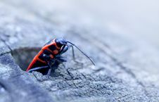 Free Red Bug Stock Photos - 14003193