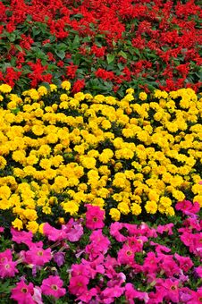Free Flower Cluster In Different Colors Stock Photos - 14003393