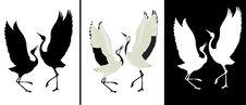 Free Bird Royalty Free Stock Photography - 14005007