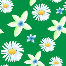 Seamless Pattern With Chamomiles Royalty Free Stock Images