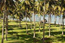 Free Coconut Trees Royalty Free Stock Photos - 14006258